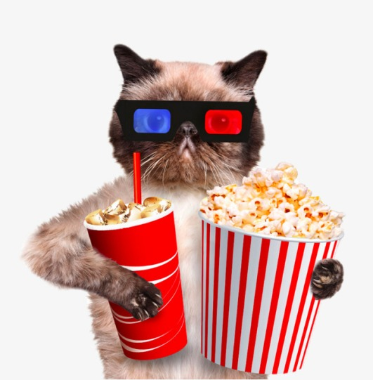 cat popcorn and drink